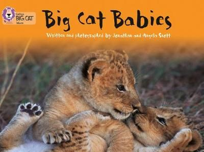 Big Cat Babies Badger Learning