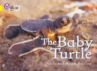 The Baby Turtle Badger Learning