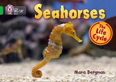 Seahorses Badger Learning