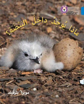 What's in the Egg? (Big Cat Arabic) Badger Learning