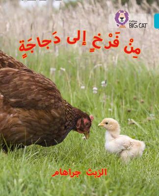 Chick to Hen (Big Cat Arabic) Badger Learning