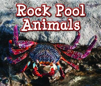 Rock Pool Animals Badger Learning