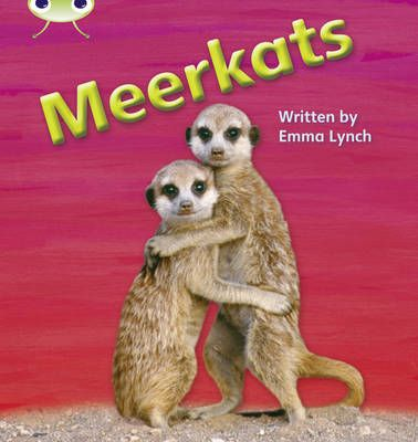Meerkats Badger Learning