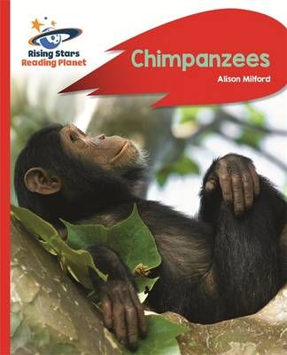 Chimpanzees Badger Learning