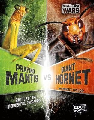 Praying Mantis vs Giant Hornet: Battle of the Powerful Predators Badger Learning