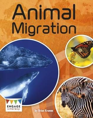 Animal Migration Badger Learning