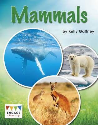 Mammals Badger Learning