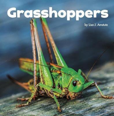 Grasshoppers Badger Learning