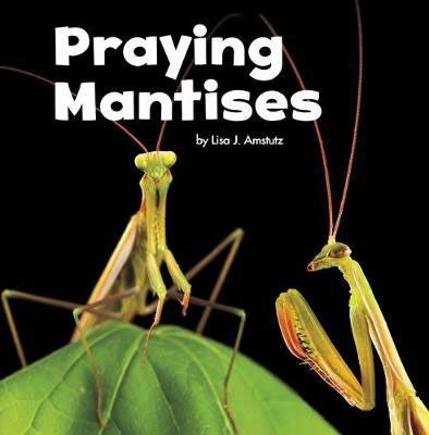Praying Mantises Badger Learning