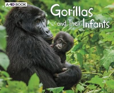 Gorillas & Their Infants Badger Learning