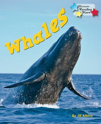 Whales Badger Learning