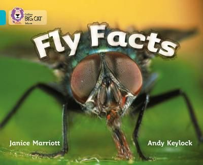 Fly Facts Badger Learning