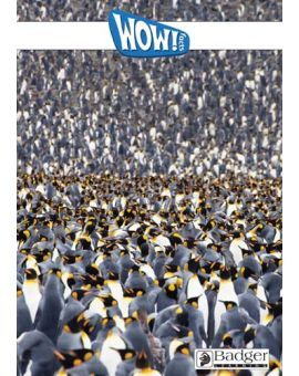 WOW! Facts White - eBook PDF CD