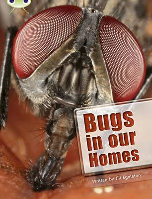 Bugs in our Homes